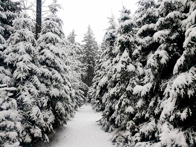 Зима в Оберхофе
