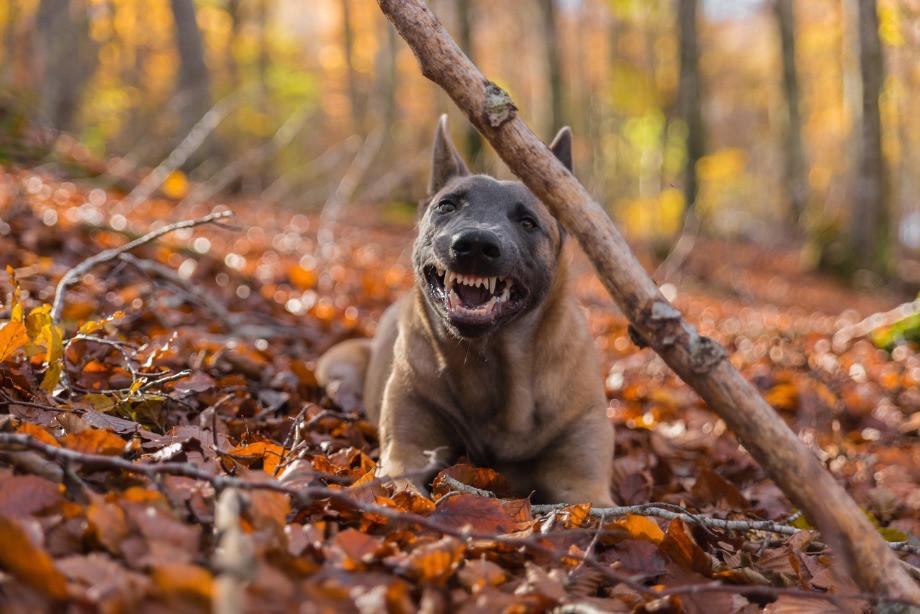 Что делать при встрече с собакой на пробежке? Cоветы бегунов, лайфхаки
