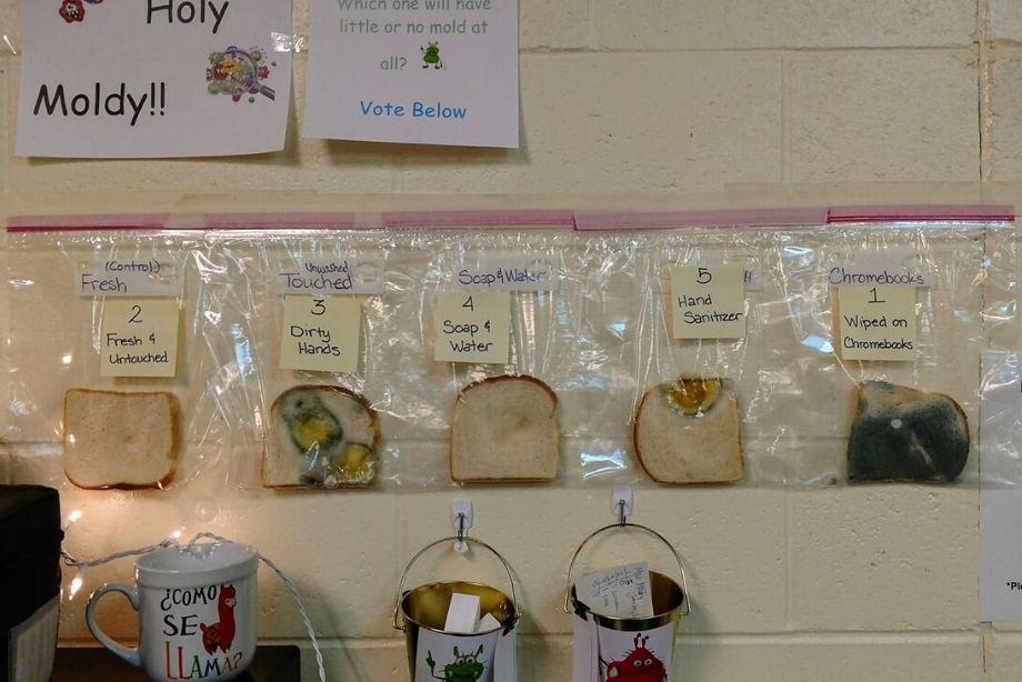 Результаты эксперимента с хлебом и грязными/чистыми руками