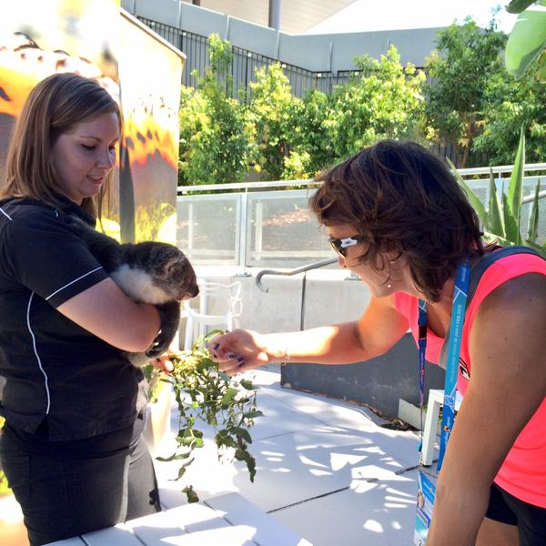 Ярослава Шведова встретилась с коалой.