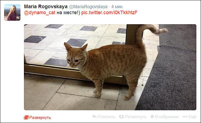 """Кошка """"всея Динамо"""" дала добро второй игре"""