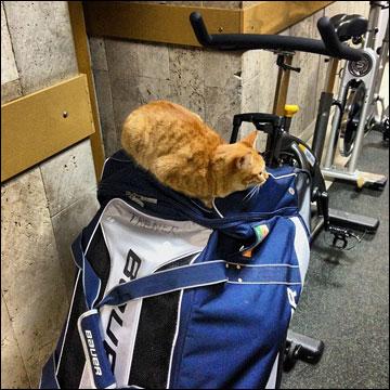 Кошка Машка и сумка Скудры