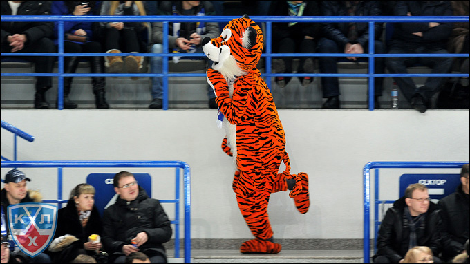 Амурский тигр прощается до сентября!