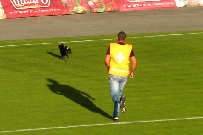 Собачка на поле в Луцке