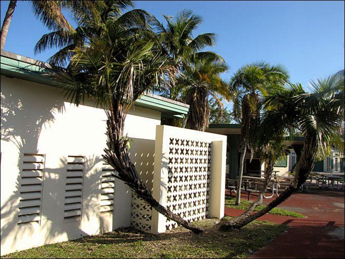 Кривые пальмы
