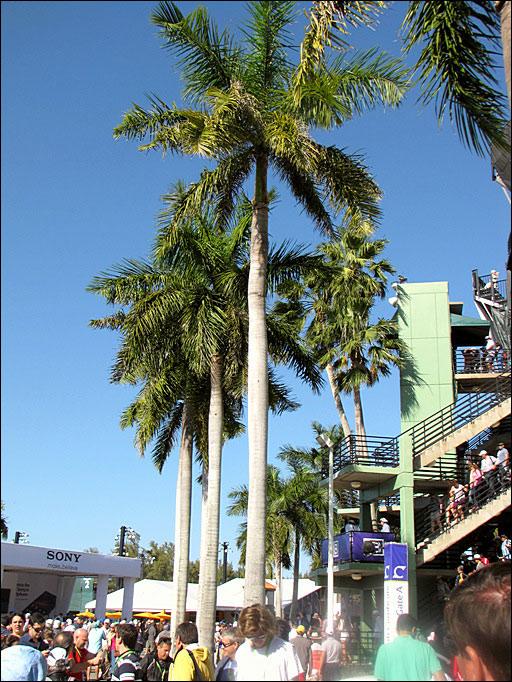 Пальмы на территории теннисного комплекса