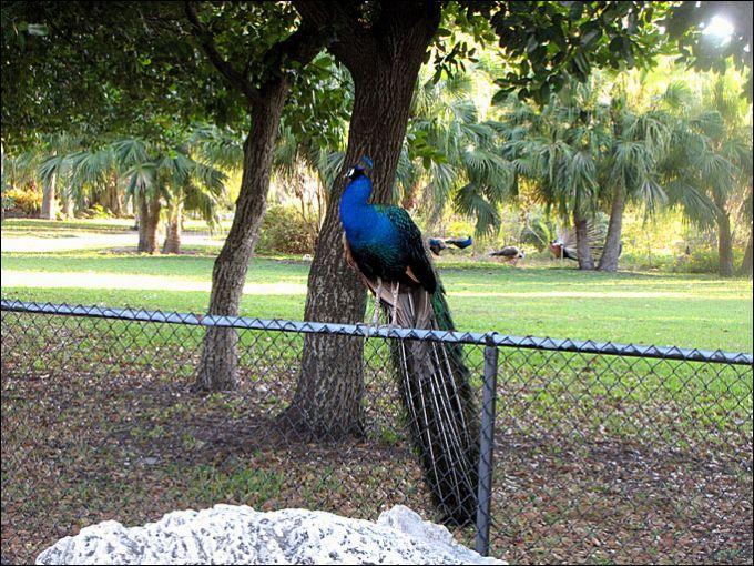 Ещё несколько прекрасных южных птиц