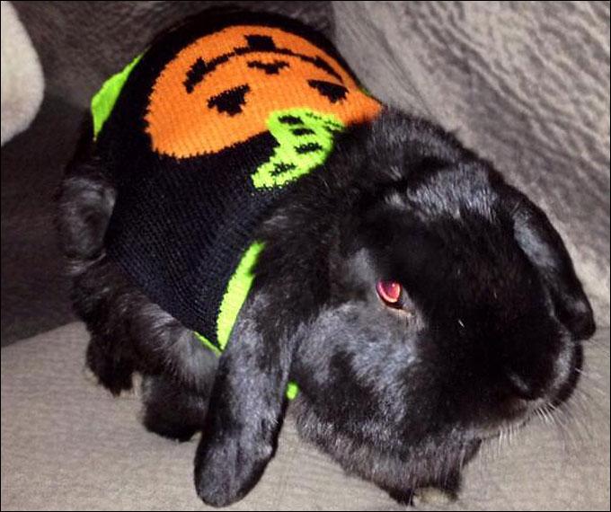 Кролик Хоппи готов к осени и Хэллоуину