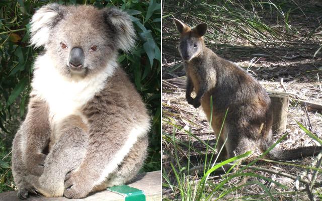 Мельбурнский зоопарк — постоянное место паломничества теннисистов