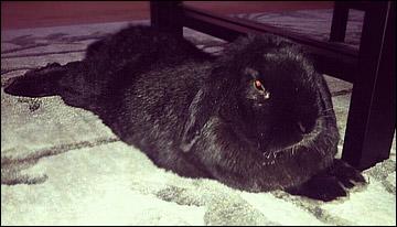 Конопка отдыхает с кроликом Хоппи