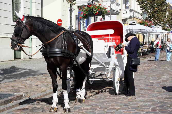 Лошадь, карета и кучер