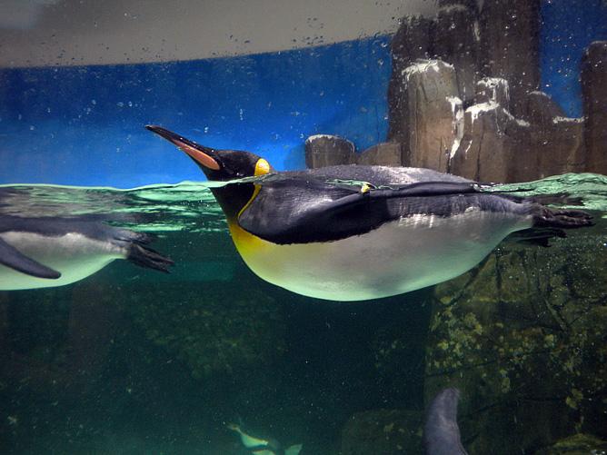 Екатерина Макарова к новому пингвиньему прыжку выше головы была попросту не готова