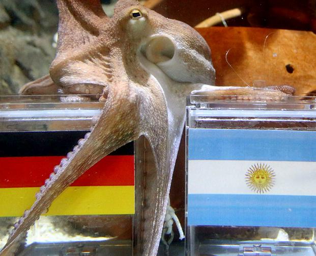 Потомок осьминога Пауля