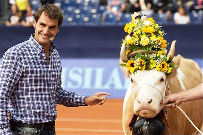 Зато швейцарцу вновь подарили корову