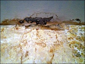 Потолки, с которых сочится и течёт