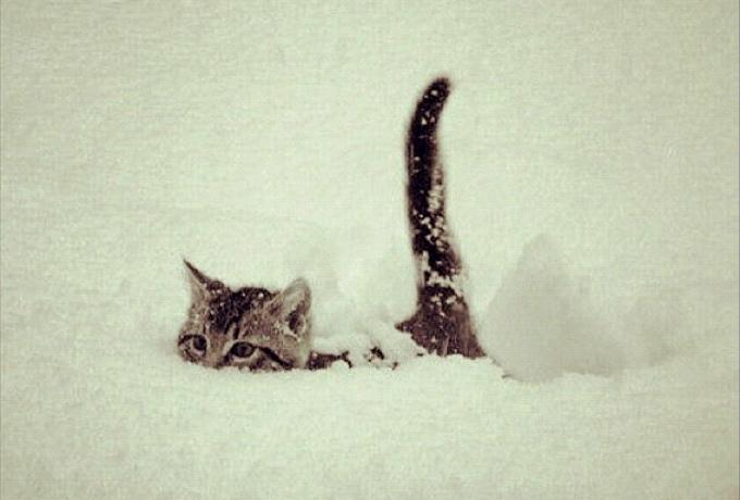 "���� �����: ""����� ���������� � �����SNOW��!"""