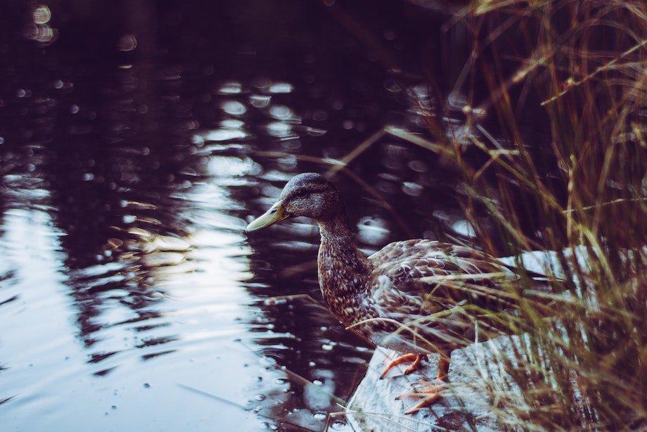 О чем нужно подумать, прежде чем купаться в речке или на озере, как безопасно плавать в озере, пруду, реке