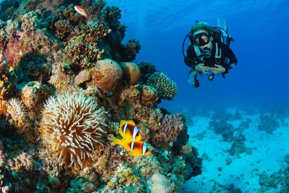 Дайвинг: как научиться нырять с аквалангом, как впервые попробовать дайвинг