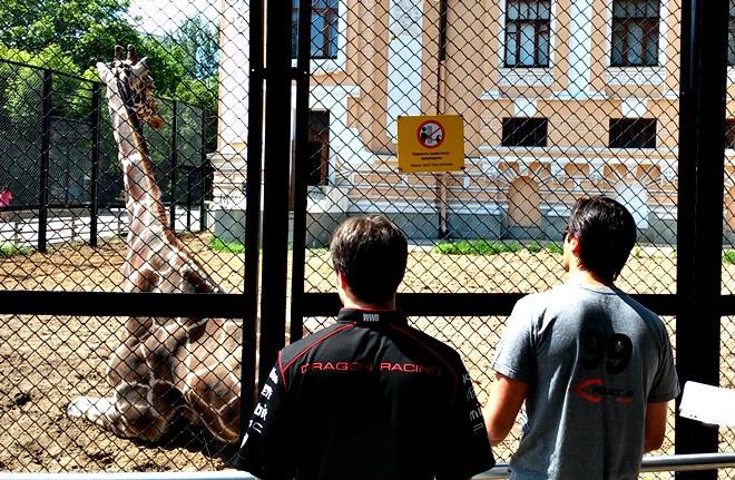 Пике и д'Амброзио в зоопарке