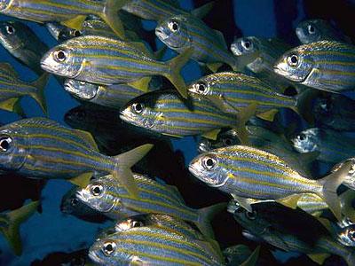 Cемь историй из жизни рыбы