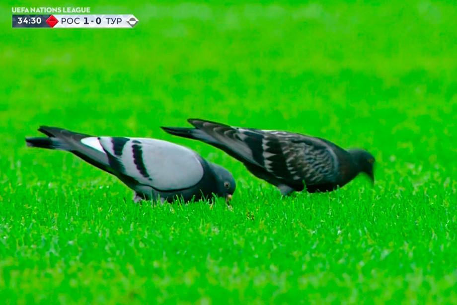 «Это Мамаев и Кокорин прилетели». Соцсети шутят про голубей на поле в Сочи
