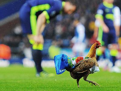 Животные-участники футбольных матчей
