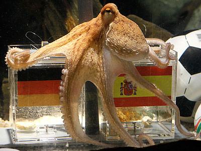 Спасти осьминога Пауля