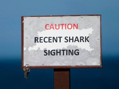 Осторожно! Акулы!