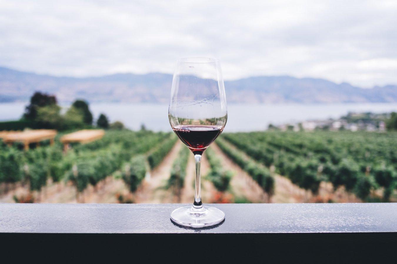 Чем полезно вино?