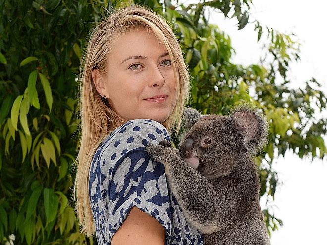 Мария Шарапова и коала