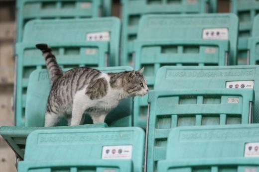 Курьёз на матче в США: кот сорвался с верхнего яруса стадиона, но болельщики его поймали