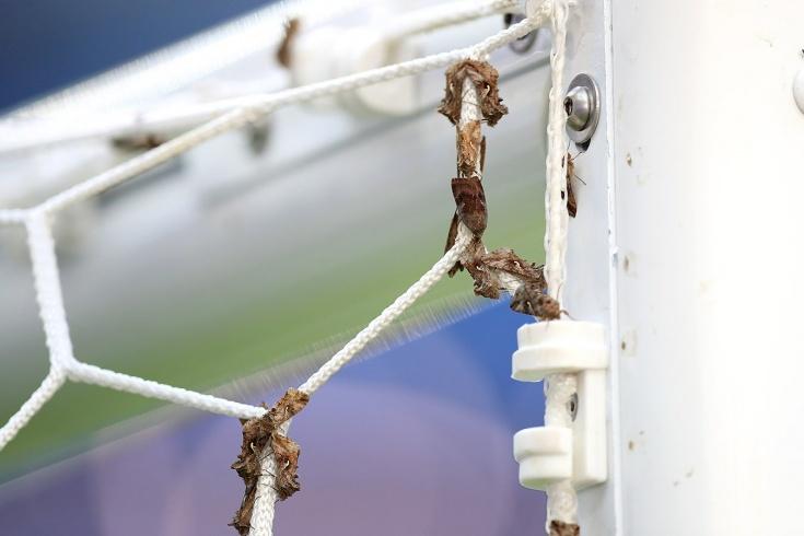 На финале Евро-2020 ожидают нашествие насекомых. Похожая история была пять лет назад
