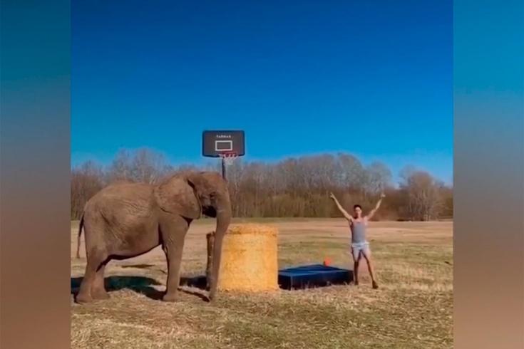 Лучшее баскетбольное видео на «Чемпионате», опрос